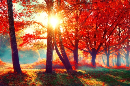 Autumn. Fall scene. Beautiful Autumnal park. Beauty nature scene